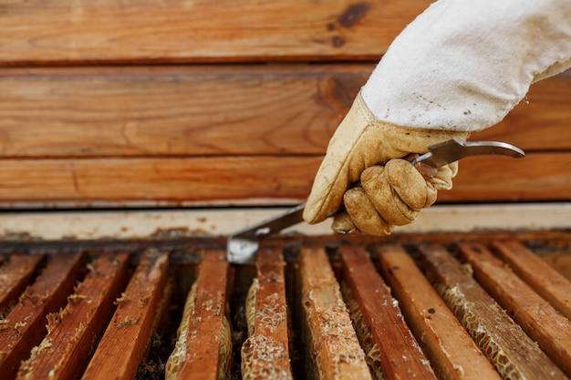 Imker trekt houten frame met honingraat uit bijenkorf met behulp van imker tool. verzamel honing. bijenteelt.