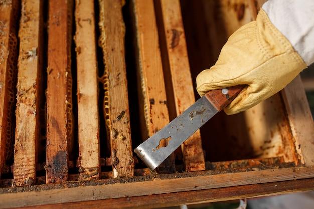 Imker trekt houten frame met honingraat uit bijenkorf met behulp van imker tool
