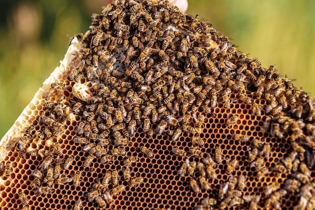 Imker werkt met bijen en bijenkorven op de bijenstal. bijen op honingraat. frames van een bijenkorf. bijenteelt. honing.