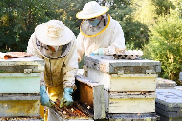 Imker werkt met bijen en bijenkorven op de bijenstal.