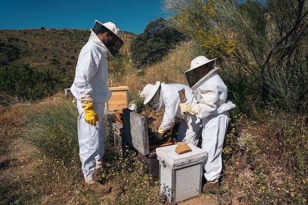 Imkers die honing verzamelen