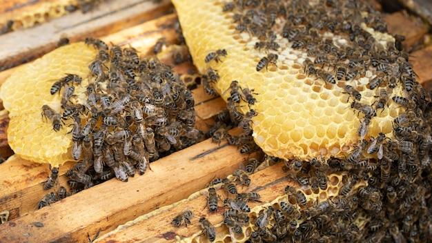 In de bijenstal werken veel bijen aan honingraten