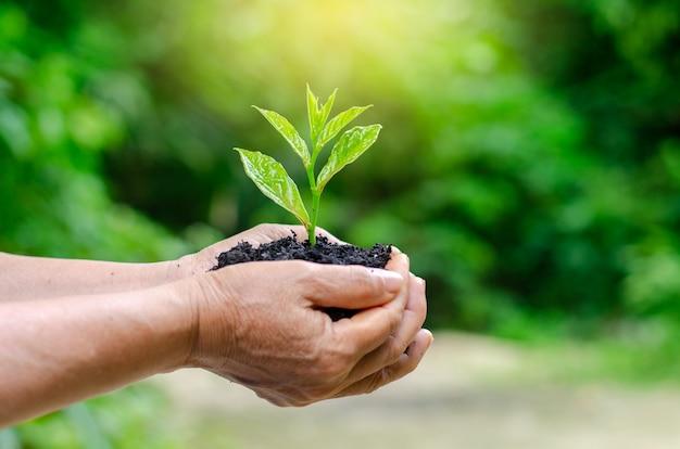 In de handen van bomen die zaailingen kweken. bokeh groene achtergrond vrouwelijke hand met boom