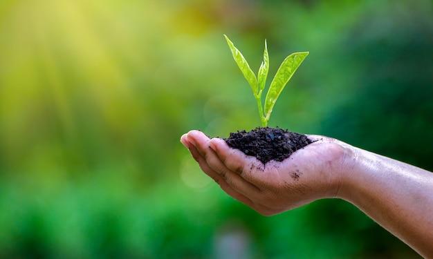 In de handen van bomen die zaailingen kweken.
