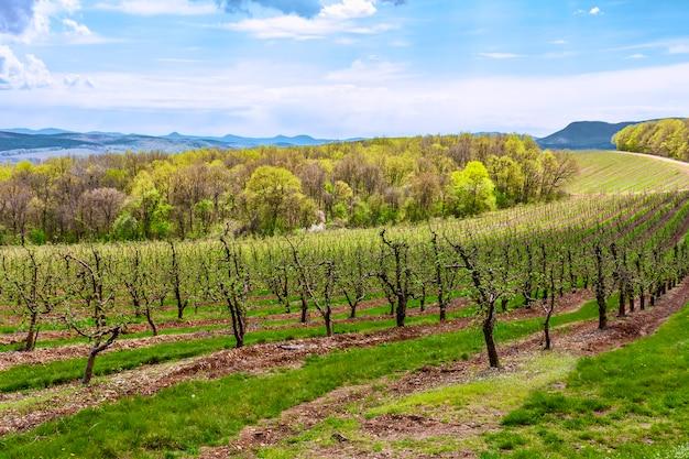 In de hooglanden, op de berghelling, fruitbomen, appelboomgaard
