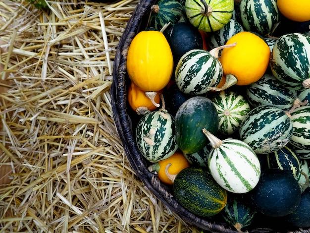 In de mand zitten kleine watermeloenen, meloenen en pompoenen. herfst oogst