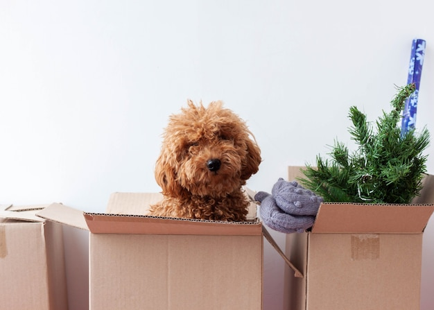 In een kartonnen doos zit een kunstkerstboom, wanten, een miniatuurpoedel