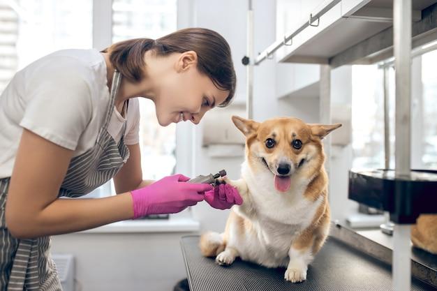 In een trimsalon. jonge donkerharige vrouw die met een hond in een huisdierenverzorgingssalon werkt