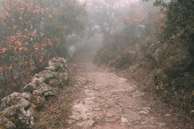 In mist gehulde landelijke weg nabij montanchez. spanje.