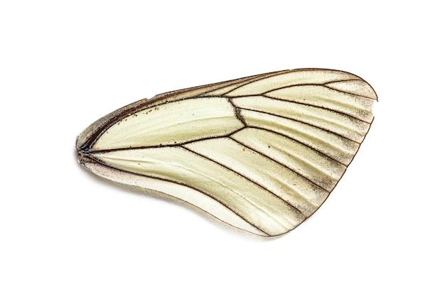 In staat van ontbinding witte en zwarte vleugel van een dode vlinder op witte achtergrond