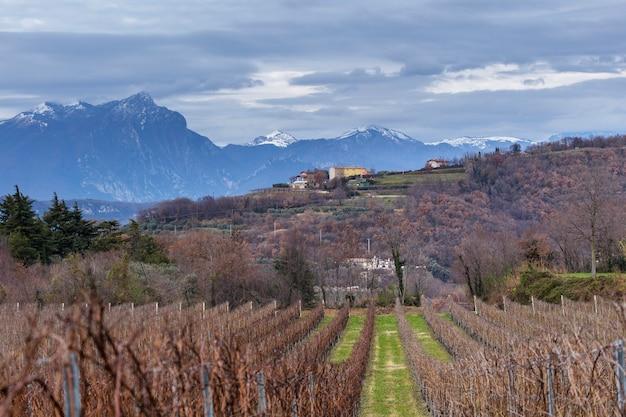 Incaffi-wijngaarden in de provincie verona met de suggestieve monte pizzocolo op de achtergrond, een berg in de voor-alpen van brescia en gardesane.