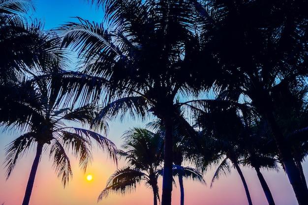 India eiland horizon patroon palm