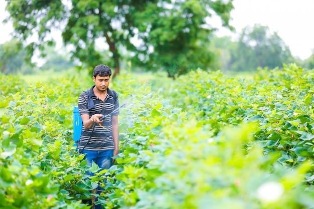 Indiase boer bespuitend pesticide op katoen veld
