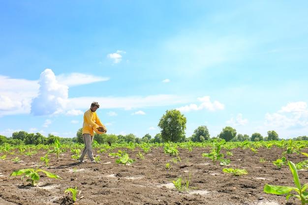 Indiase boer die kunstmest op het gebied van de banaan verspreidt