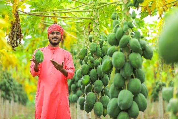 Indiase boer in een traditionele klederdracht op het papajaveld