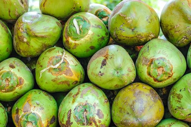 Indiase groene kokosnoot bos of groep