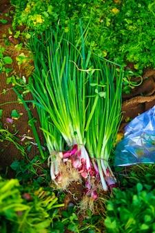 Indiase groentenmarkt, vegitief voedsel