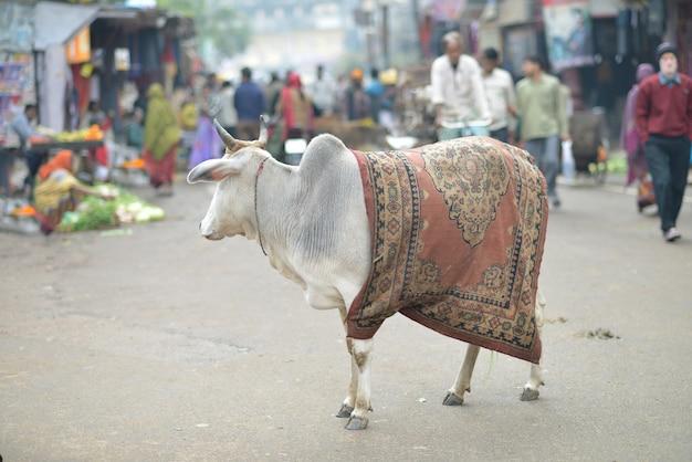 Indiase koe in de straat met een tapijt