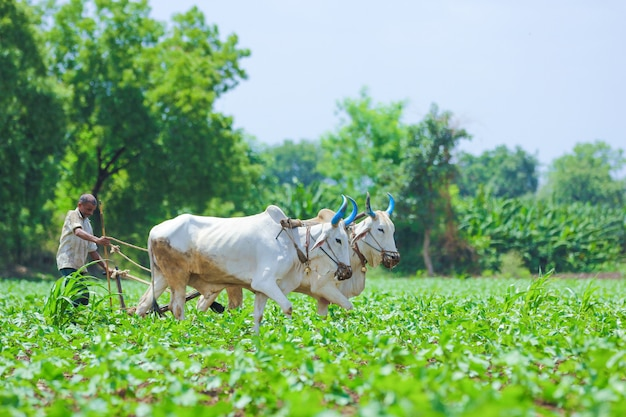 Indiase landbouwtechniek
