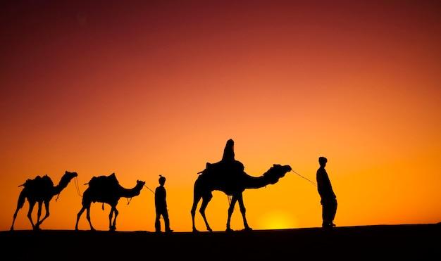 Indiase mannen lopen door de woestijn met hun kamelen