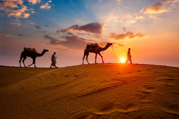 Indische kameleers (kameelbestuurder) bedoeïen met kameelsilhouetten in zandduinen van thar-woestijn op zonsondergang.