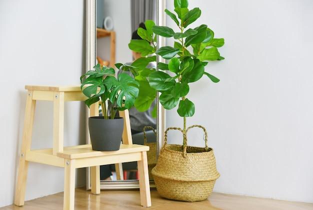 Indoor tropische kamerplanten