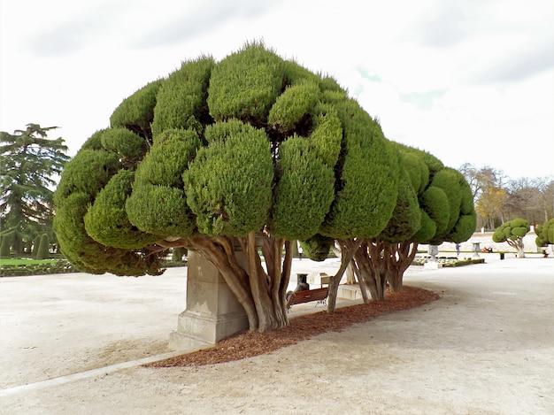 Indrukwekkende bomen in parque del buen retiro of park van de aangename retraite in madrid, spanje