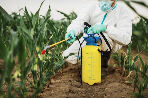 Industriële landbouw thema. man die giftige pesticiden of insecticiden sproeit op een maïsteeltplantage.