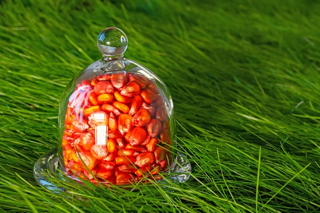 Ingelegde, rode maïszaden voor zaaien in een schip op een grasachtergrond