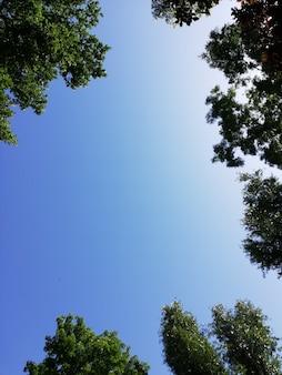 Ingelijst shot van een heldere blauwe lucht omgeven door boomtakken