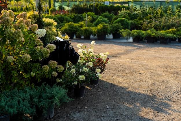 Ingemaakte bloemen en kuipen en groenblijvende planten in het tuincentrum, planten en struiken en struiken