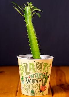 Ingemaakte cactus