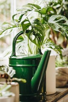 Ingemaakte groene planten op venster. home decor en tuinieren concept.