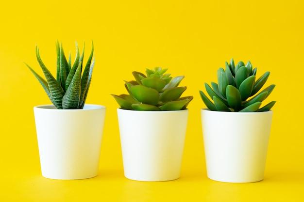 Ingemaakte kamerplant op een gele, lichte achtergrond