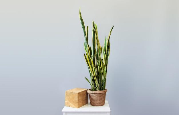 Ingemaakte plant sansevieria op een grijze achtergrond home decor kopie ruimte kinfolk stijl decoratie