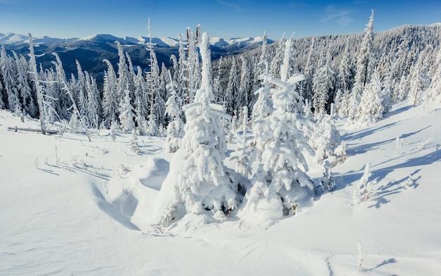 Ingesneeuwde bomen van het de winterlandschap