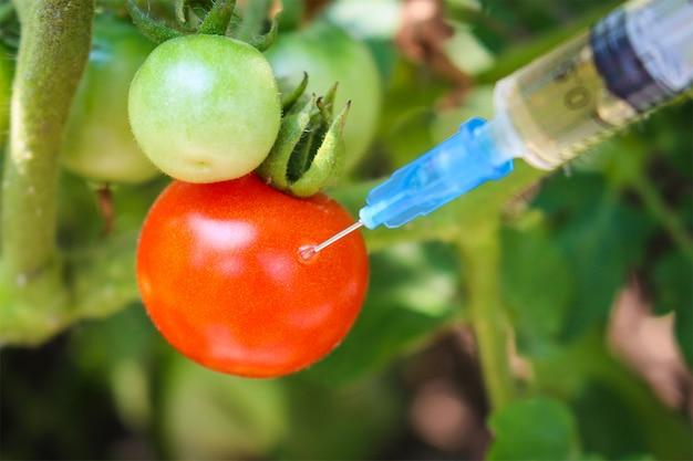 Injectie van spuit in rode tomaat in tuin