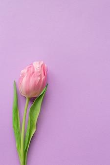 Inschrijving roze tulp aan de linkerkant van pastel violette achtergrond.