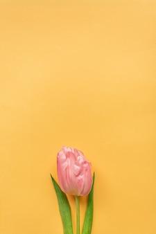 Inschrijving roze tulp op pastel gele achtergrond. wenskaart voor vrouwendag. plat leggen. kopieer ruimte. plaats voor tekst. concept van internationale vrouwendag, moederdag, pasen. valentijnsdag liefdesdag