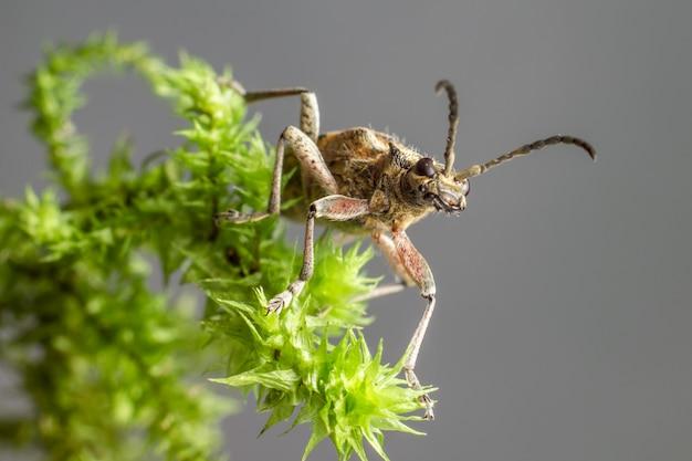 Insect met lange antennes die op plant zitten
