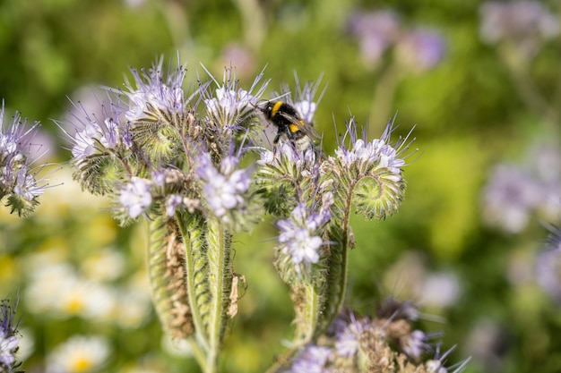 Insect op de bloemen in het veld overdag