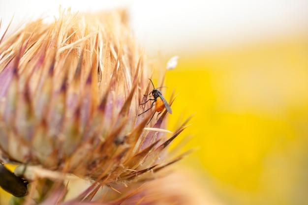 Insect op een plattelandsbloem