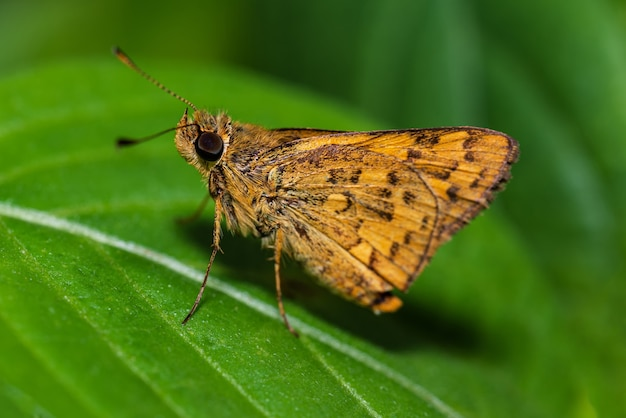 Insect vlinder op groene leafe close-up