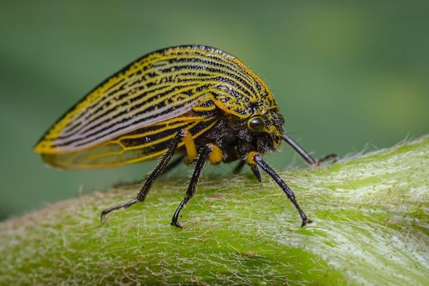 Insect zijwaarts neergestreken op een groene tak 2
