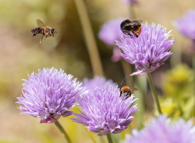 Insecten bestuiven bloemen in de tuin