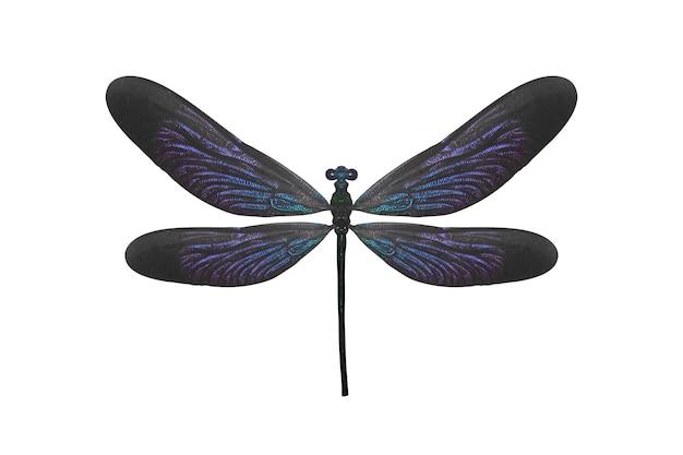 Insectlibel met blauwe vleugels die op wit worden geïsoleerd