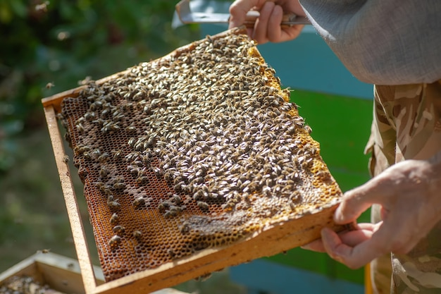 Inspectie van bijenkolonie in een bijenstal in het voorjaar