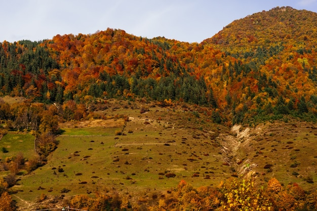 Inspirerende natuur en landschap, berghellingen zijn bedekt met planten en bomen, herfstnatuur en zon