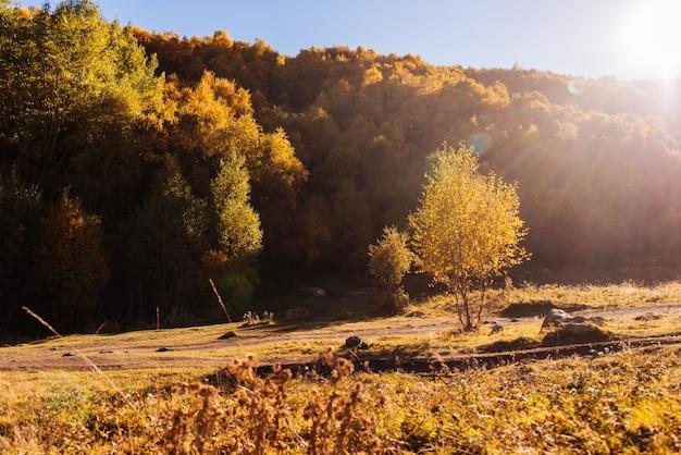 Inspirerende natuur, herfstbos en bomen in de zon