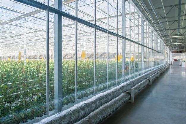 Interieur van industriële kas met glazen wand en buizen, pijpleiding